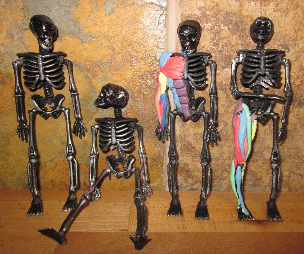 Смотреть как сделать из пластилина скелета